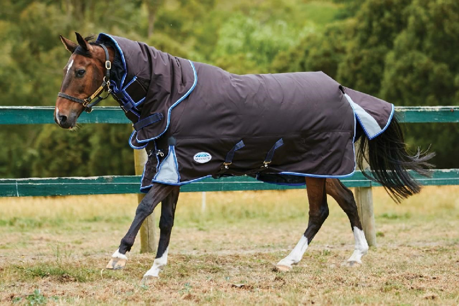 What are horse rugs and important features to look out for?
